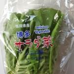 博多サラダ菜